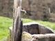 Bio-Pools sparen 500 Millionen Liter Trinkwasser