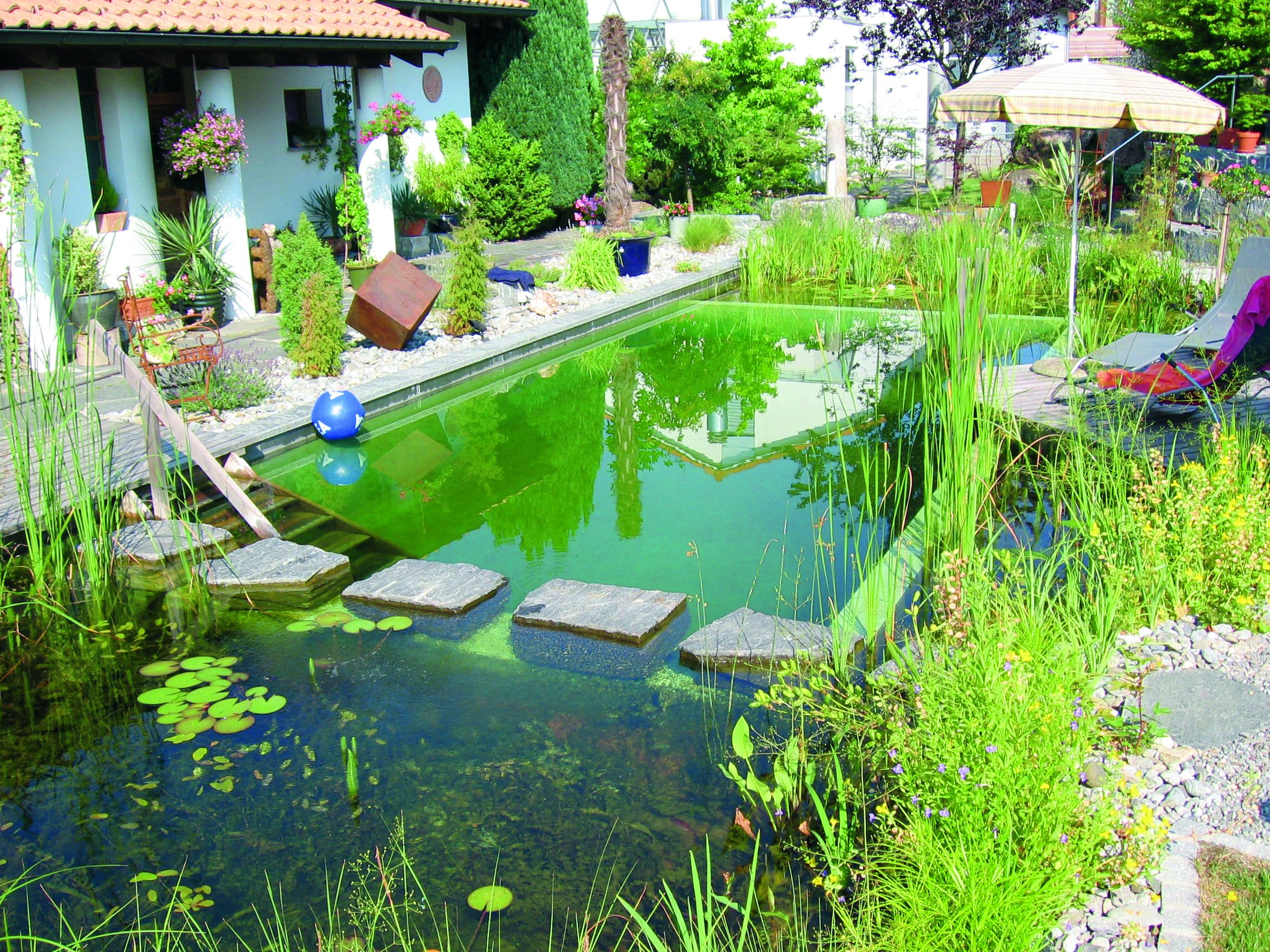 Pinterest the world s catalog of ideas for Koi pond swimming pool